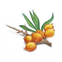 Alma-HOMOKTÖVIS 100%-os, rostos natúr gyümölcslé 3 l