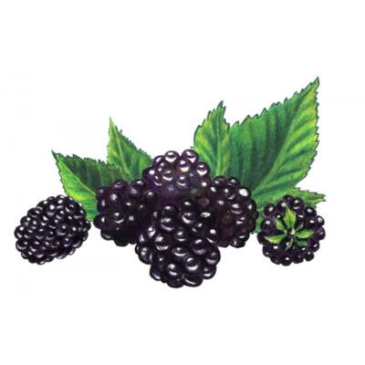 Alma-FEKETESZEDER 100%-os, rostos natúr gyümölcslé 3 l