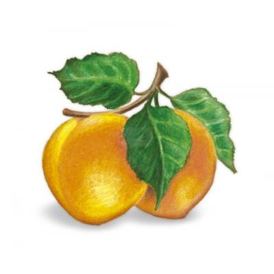Alma-KAJSZIBARACK 100%-os, rostos natúr gyümölcslé  5 l