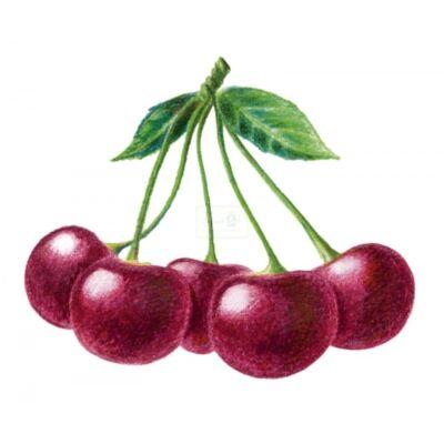 Alma-MEGGY 100%-os, rostos natúr gyümölcslé 5 l