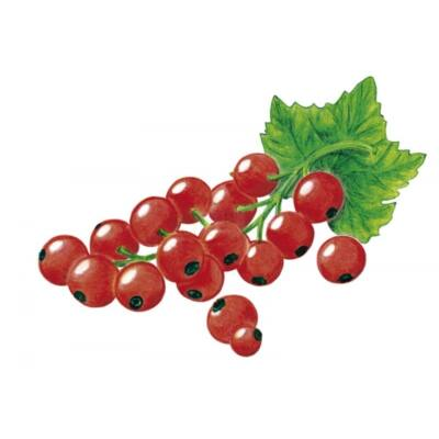 Alma-PIROS RIBIZLI 100%-os, rostos natúr gyümölcslé 5 l